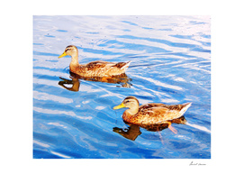 2 Ducks in a Pond