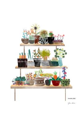 Indoor Botanical Plants