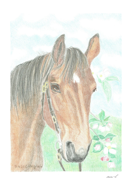 Horseportrait from a swiss horse