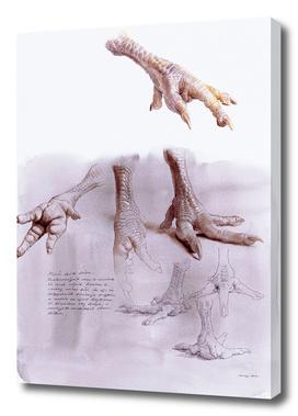 Chicken Foot Study