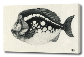 Fish with spots