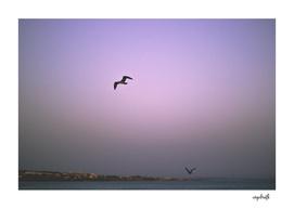 / fly high /