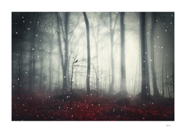 spaces VII - dreaming woodland