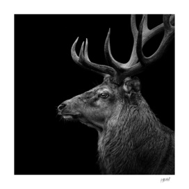 Deer In Black And White
