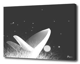 Whale BW