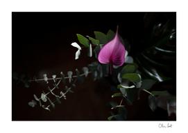 Purple anthurium with eucalyptus
