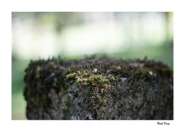 Moss Pillar