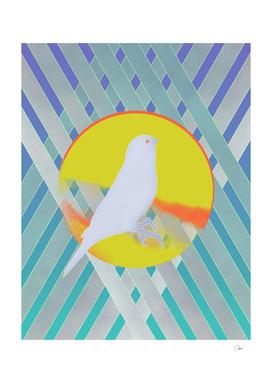 Bluebird Waiting Summer
