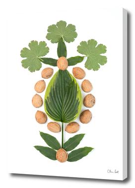 Nutshells and leaves