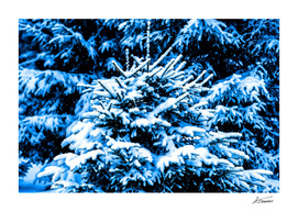 Season's Greetings From The Blue Forest