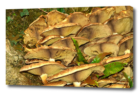 Toadstool Gills