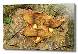 Toadstool Lamella Ribs