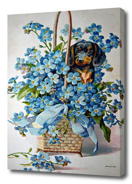 Dachshund and Forget-me-Nots