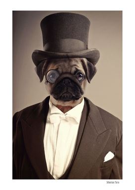 Classy pug