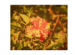 vintage photo of red flower