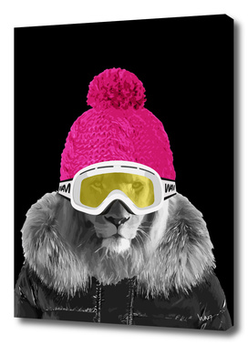 Lion winter sports