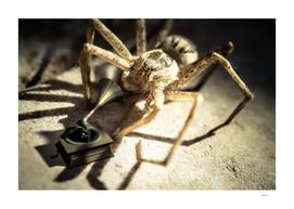 Arachnaphonograph