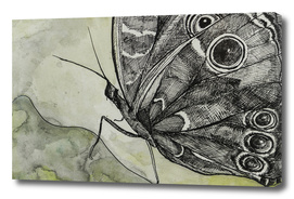 Butterfly 1_ Indian Ink_Craftiespot
