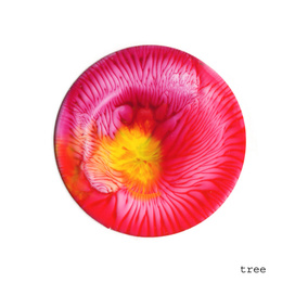 Floral bloom