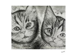 Kittens Duo_Craftiespot