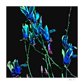 Baggin Blooms  I