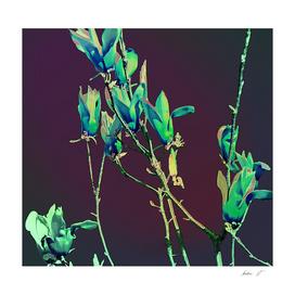 Baggin Blooms III