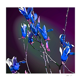 Baggin Blooms IV