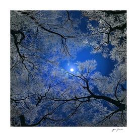 Moonlight Trees