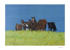 Herd of horses relaxing
