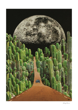 Road and cactus