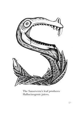S is for Sanseverra