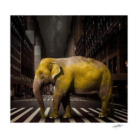 ELEPHANT in New York City