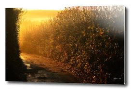 Sunrise Lane
