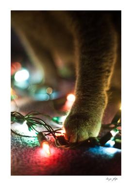Cat foot