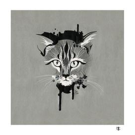 Gray Kitty Cat