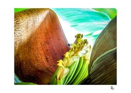 Bananis 9