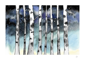 Birch Shadows In Winter