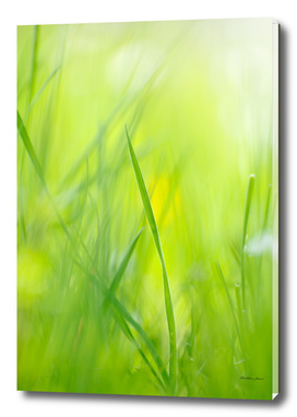 Bright green grass in spring