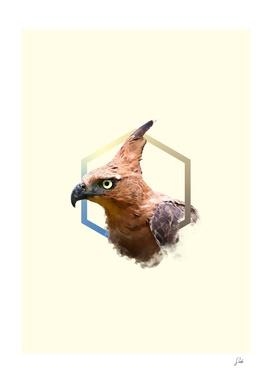 javanhawk-eagle