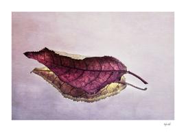 Reflected Leaf