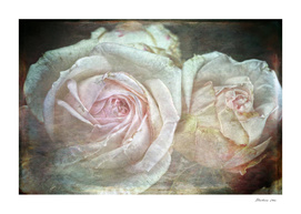 Shabby and Vintage English Roses