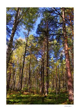 Fall. Forest. Light