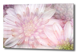 Flower Power - Spring Flowers - Vintage Style