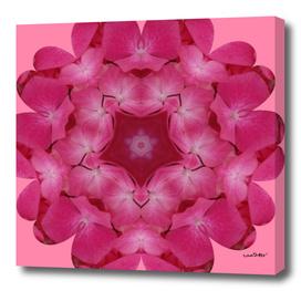 Pink Floral Mandala 0409 on pink background
