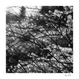 Winter garden black and white photo