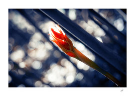 Flower in Tropical Garden