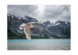 Glacier Bay Flyby