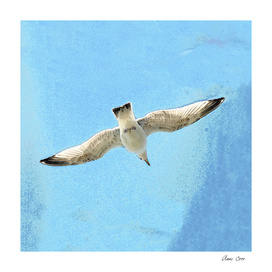 Hayle to the gull
