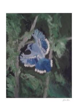Flying Bluejay
