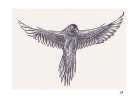 Ballpen Bird Drawing 10